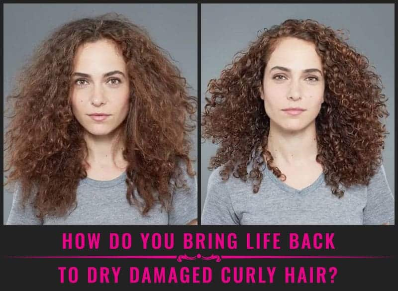 Featured Image Of How Do You Bring Life Back To Dry Damaged Curly Hair?