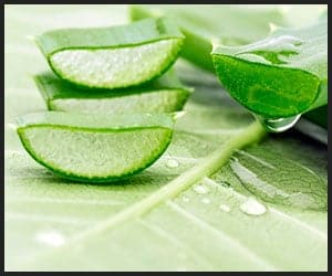 Aloe Vera - 301201141